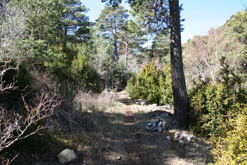 Senda a través del bosque
