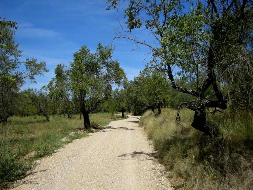 Camino entre campos de almendros