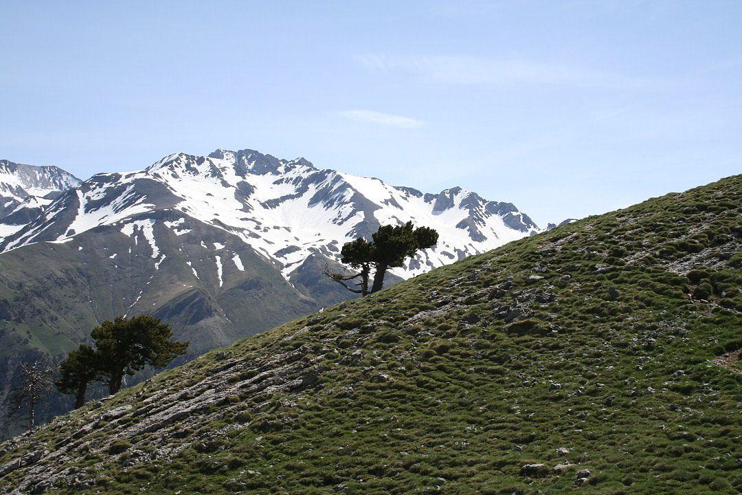 Un pino muy cercano a la cima