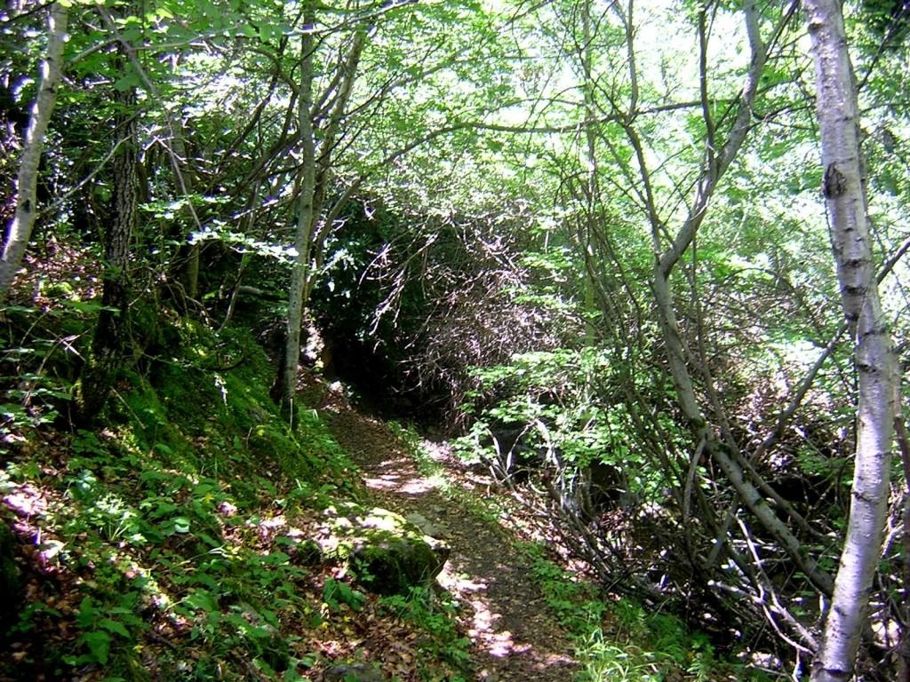 Tramo inicial del sendero entre abundante vegetación.