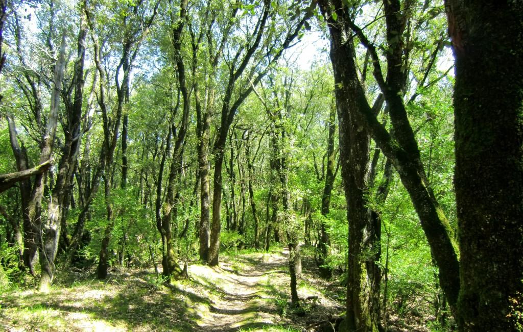 Bosque Plano