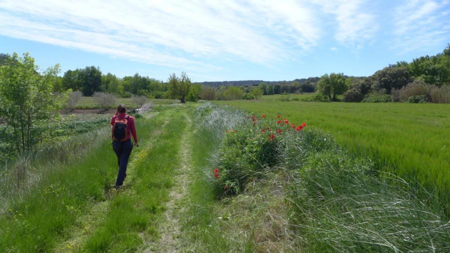 Camino hacia el Salto entre campos de cultivo