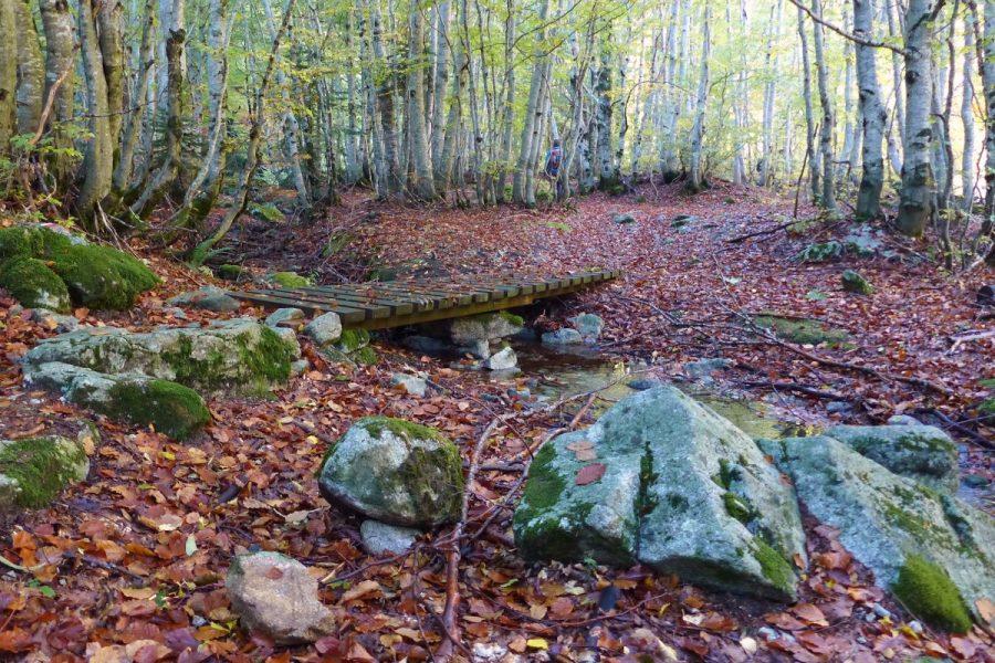 Puente de madera sobre pequeño arroyo