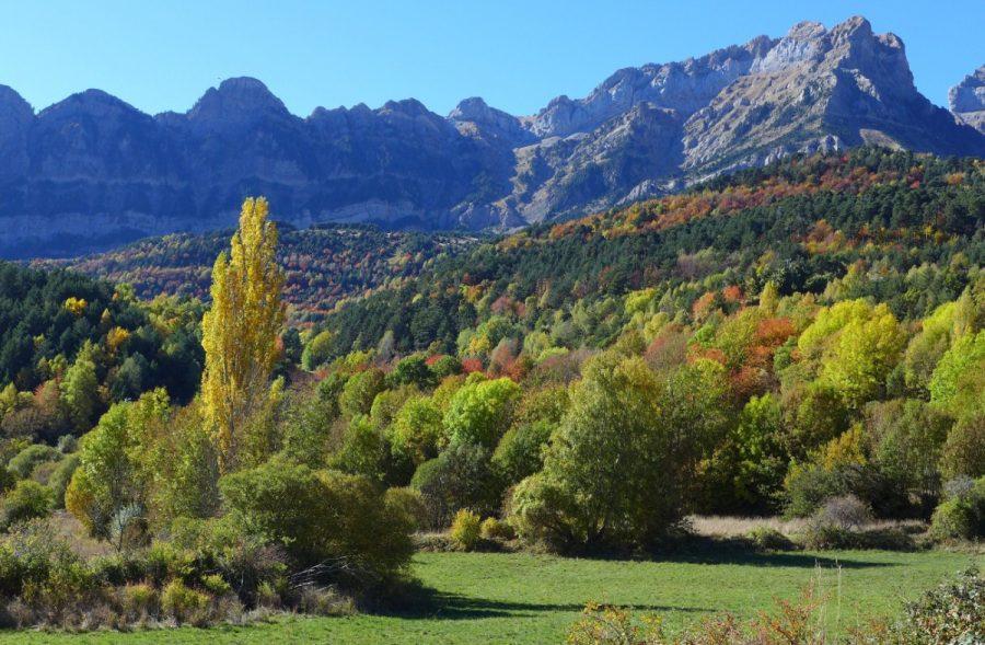 Bosques mixtos que se extiende a las faldas de la Sierra de La Partacua