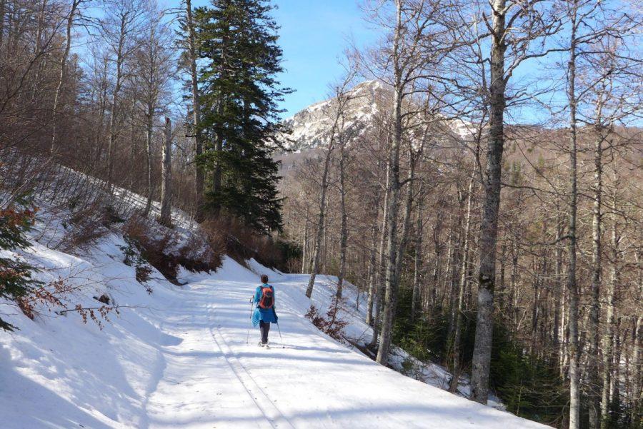 Regreso por circuito de esquí nordico
