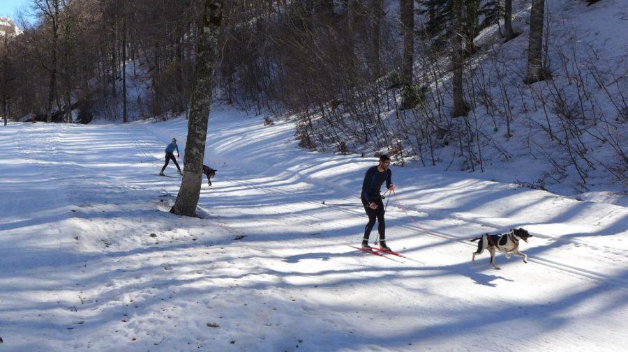 Competición de esqui tirado por perros en el circuito de esquí de fondo de Linza