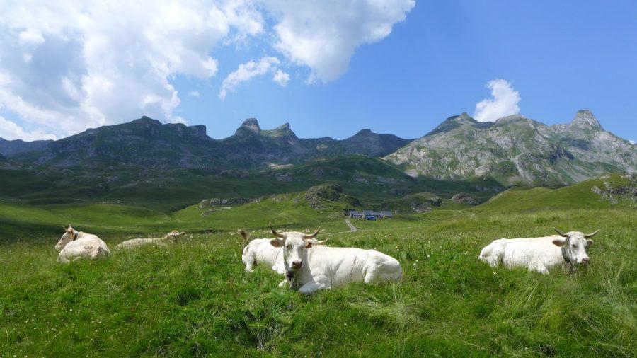 Praderas del Circo de Aneou donde es frecuente ver vacas pastando. Al fondo las cimas que definen la frontera franco española.